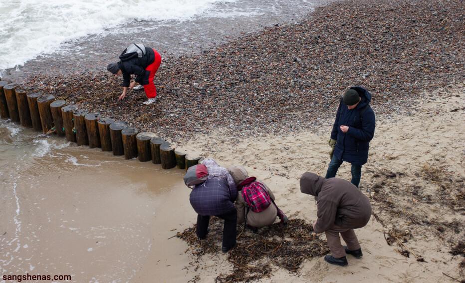 جمع آوری سنگ کهربا در ساحل