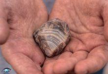 Photo of 6 معدن مهم عقیق در ایران به همراه مکان و مختصات آنها