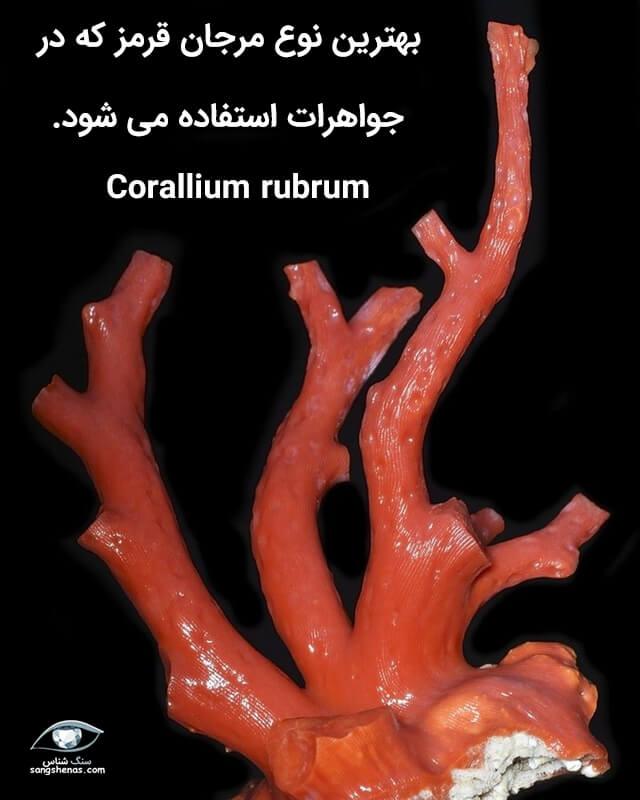 بهترین نوع سنگ مرجان قرمز روبروم کورالیوم