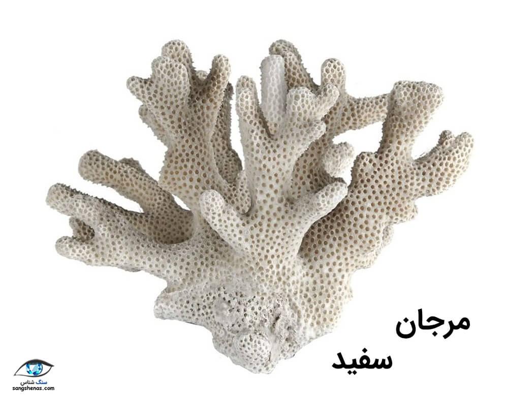 سنگ مرجان سفید