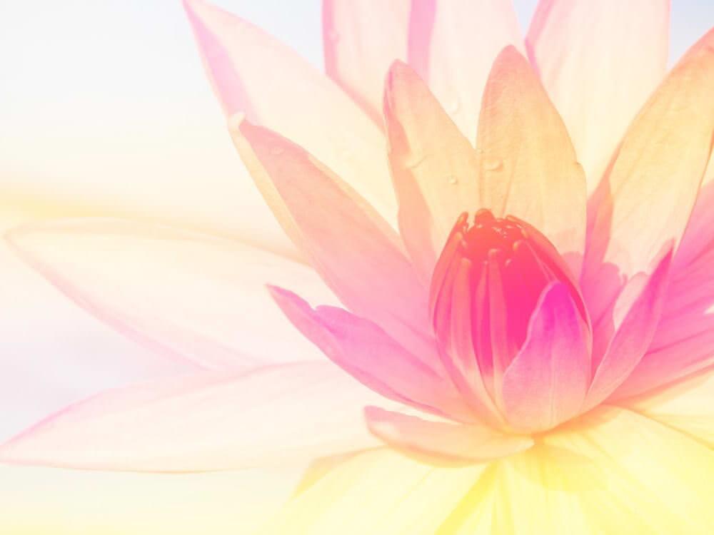 گل نیلوفر آبی lotus